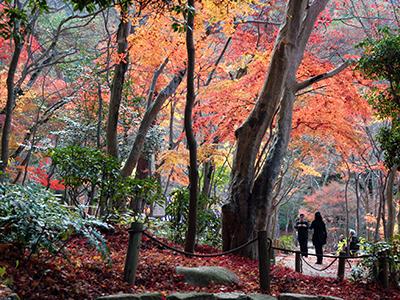 瑞宝寺公園141128.jpg