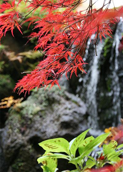 糸紅葉.jpg
