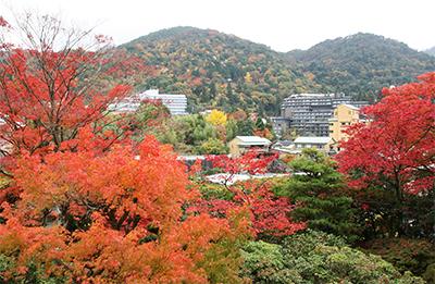 老松+遠くの山.jpg