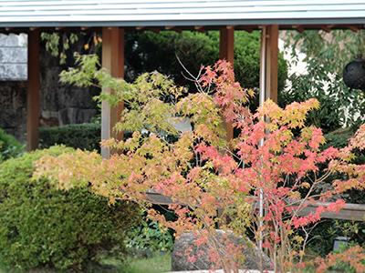 紅葉とススキと秋の空