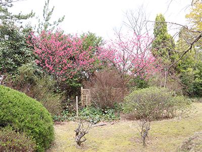 10階庭園.jpg