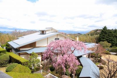 130407-三の湯棟と枝垂桜.jpg