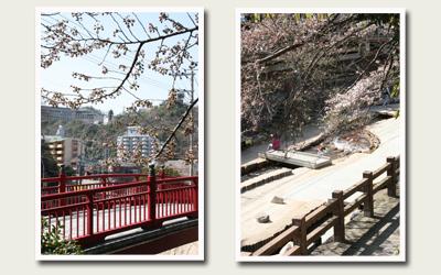 20120412ねね橋付近.jpg