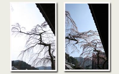 20120412善福寺 比較.jpg