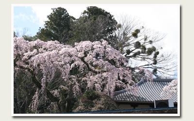 20120414善福寺.jpg