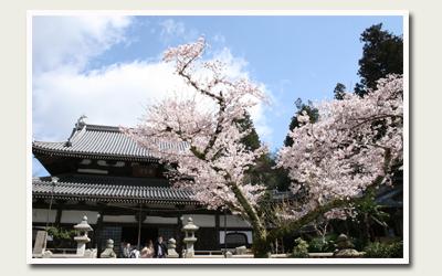 20120414温泉寺.jpg