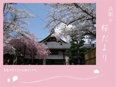 20120418念仏寺.jpg