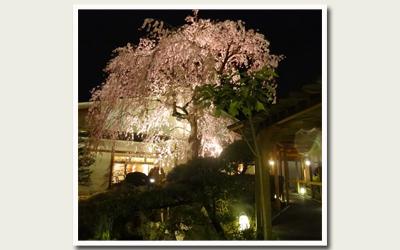 20120421夜桜.jpg