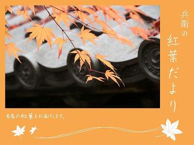 20121128善福寺紅葉.jpg