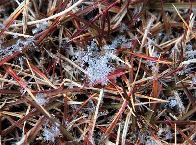 20130104雪の結晶.jpg