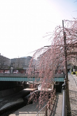 20130324-さくらだより吉高屋さんと太閤橋.jpg