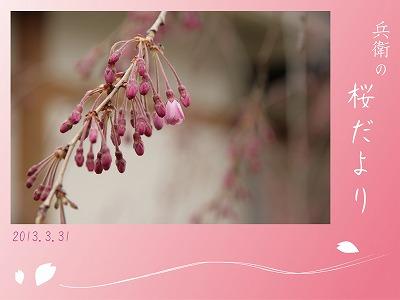 20130331八重紅枝垂桜.jpg
