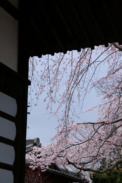 20130331善福寺.jpg