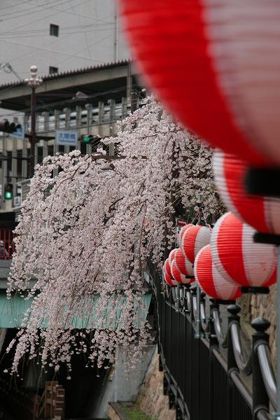20130331枝垂れ桜.jpg