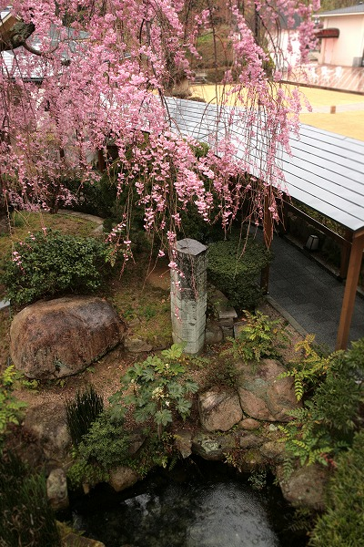 20130406-兵衛向陽閣枝垂桜.jpg
