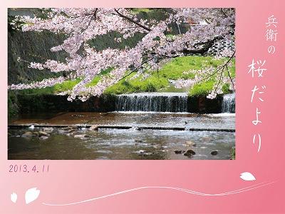 20130411-桜舞.jpg