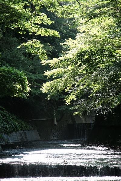 20130629緑美しい有馬川.jpg
