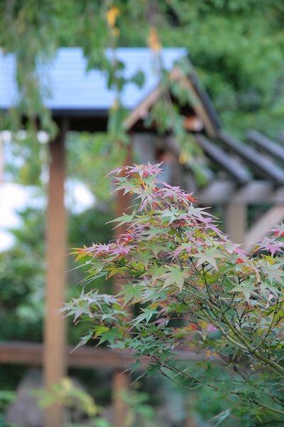 20131017-9階庭園.jpg