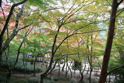 20131103瑞宝寺公園2.jpg