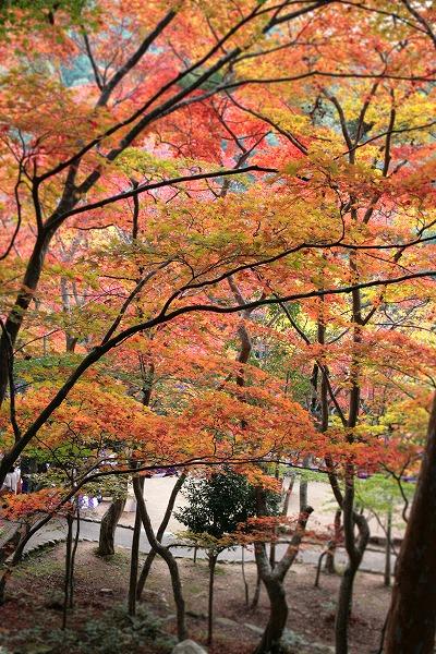 20131108-瑞宝寺公園木々.jpg