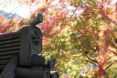 20131113-善福寺.jpg