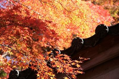 20131113-瑞宝寺公園4.jpg