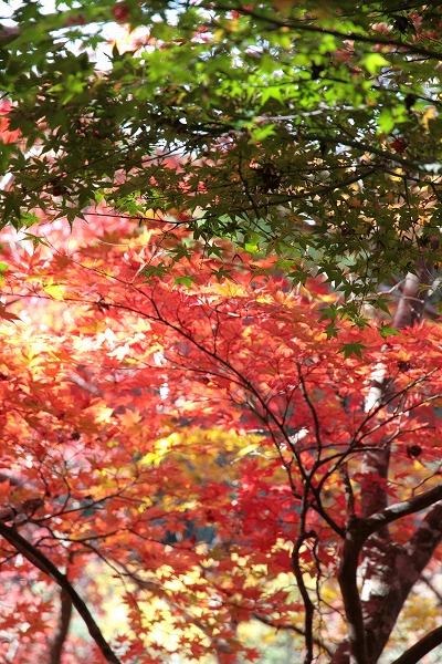 20131113-瑞宝寺公園3.jpg