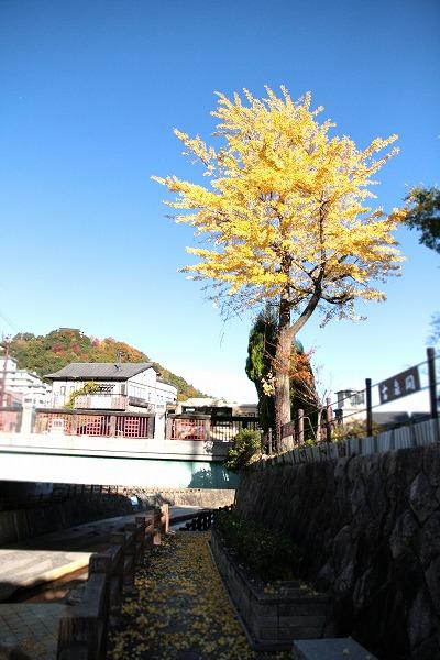 20131118-太閤橋の銀杏.jpg