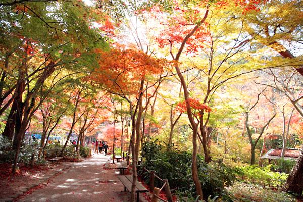 20131119-瑞宝寺公園2.jpg