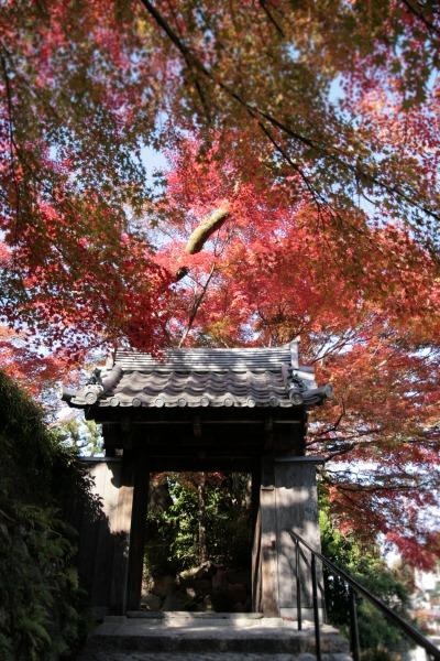 20131121-善福寺.jpg