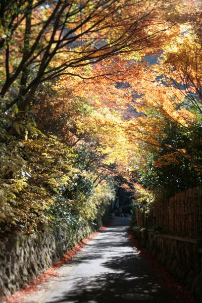 20131121-鼓ケ滝公園への道.jpg