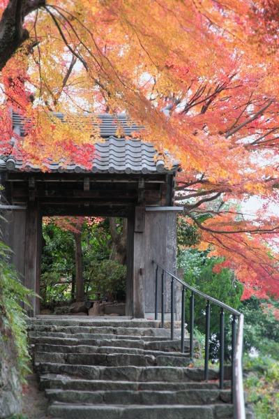 20131125-善福寺と紅葉.jpg