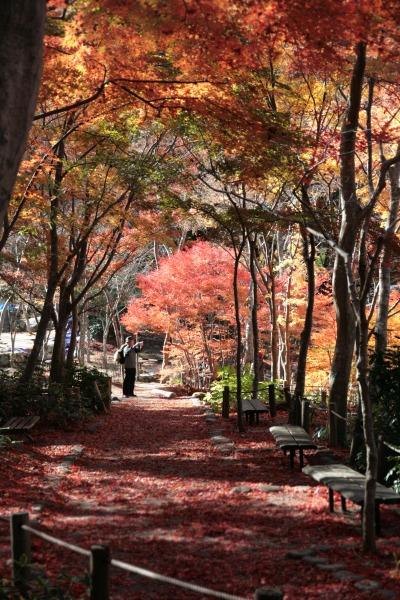 20131126-瑞宝寺公園.jpg
