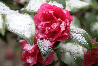 20140306-朝の庭園にてブログ用.jpg