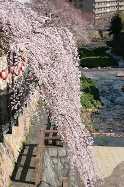 20140402-太閤橋から有馬川を望む-ブログ用.jpg