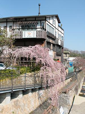 20150331吉高屋桜2.jpg