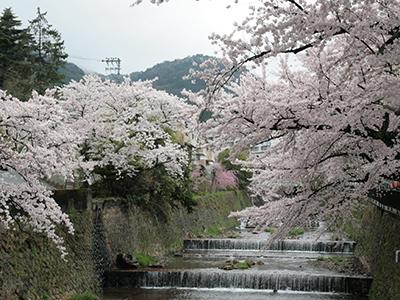 20150408有馬川桜2.JPG