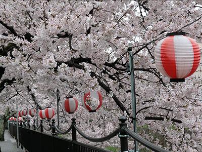 20150408有馬川桜1.JPG