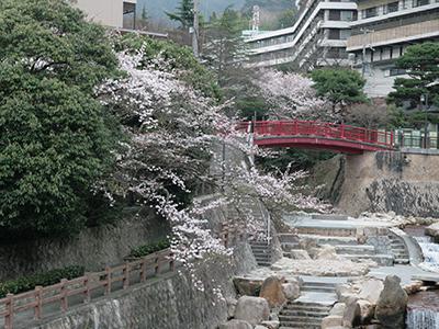 2015043ねね橋桜.JPG