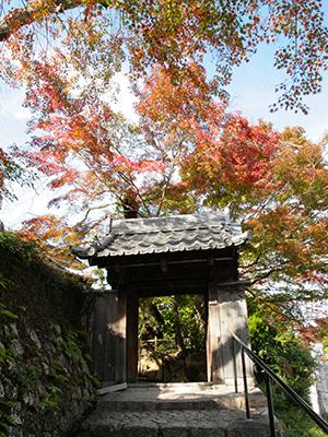 20151116ブログ用-善福寺.jpg