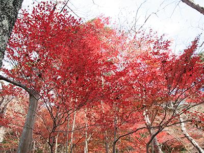 20151116ブログ用-瑞宝寺公園.jpg