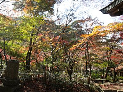 20151116ブログ用-瑞宝寺公園3.jpg