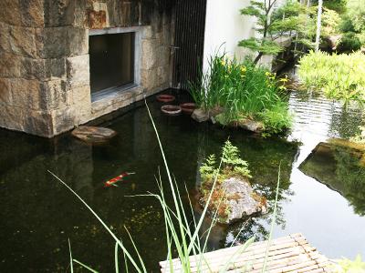 9階庭園鯉