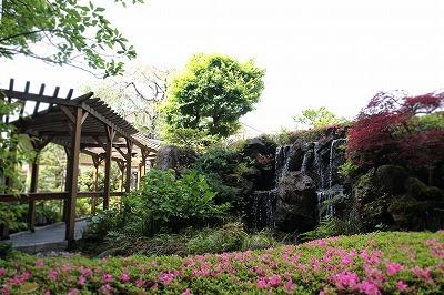 9階庭園つつじ.jpg