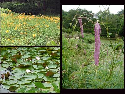 Rokko Alpine Botanical Garden.jpg