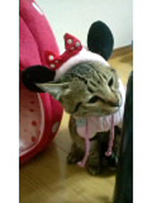 cat_uematsu.jpg