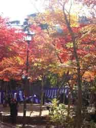 zui20101111.jpg