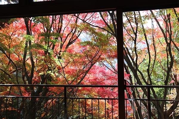 花の舞紅葉
